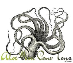 Huile de calamar et oméga 3 pour le corps