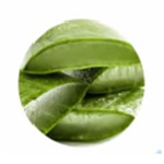 Aloe Liquid Soap | Aloe Vera