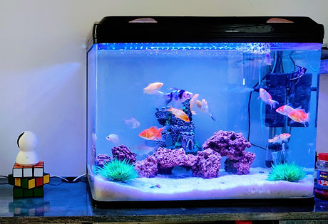 clear%20glass%20fish%20tank%20with%20blue%20fish_edited.jpg