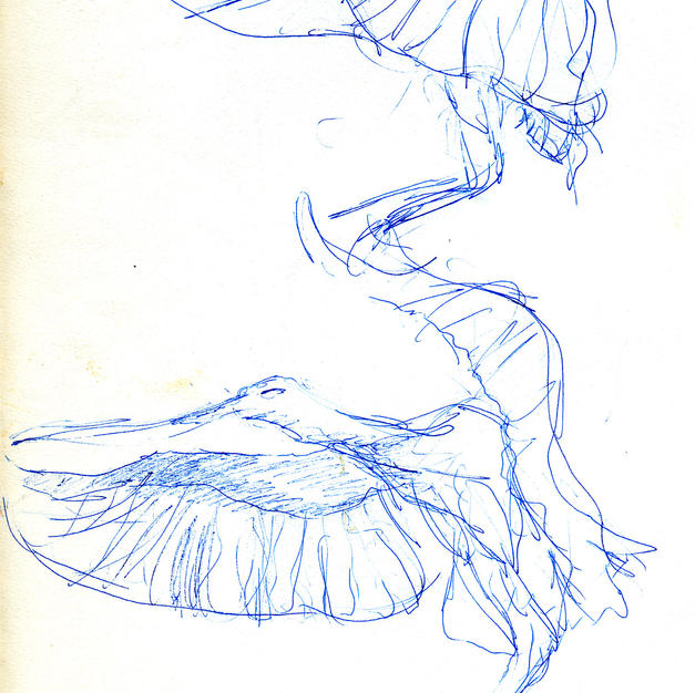Croquis d'études d'oiseaux