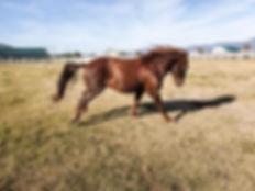 Hondo Running_edited.jpg