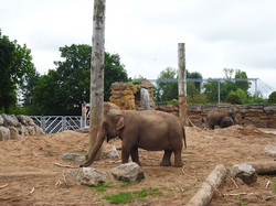 chester-zoo