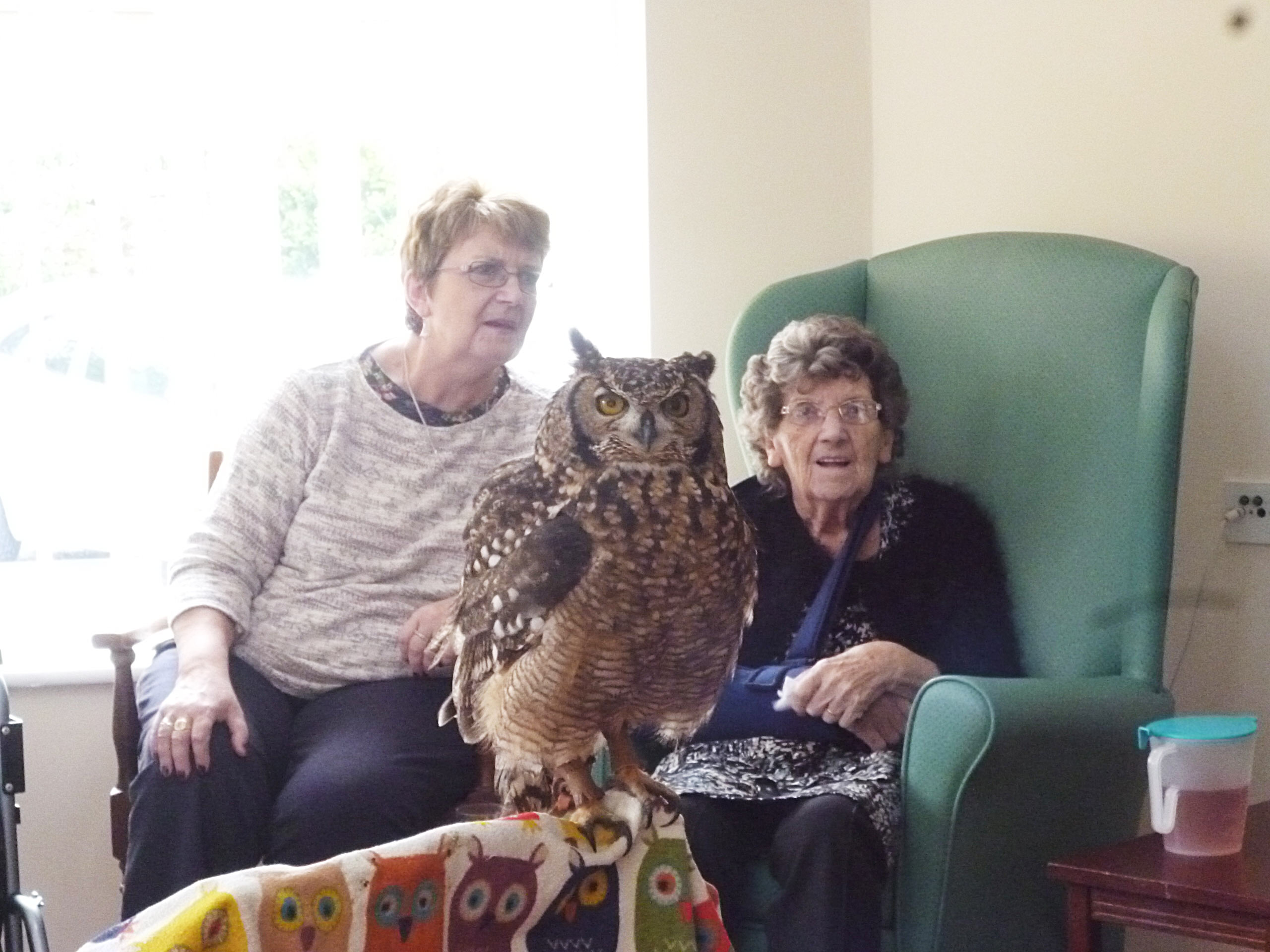 owl-photo-trewan-house5
