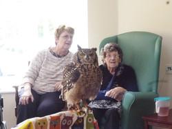 owl-photo-trewan-house5