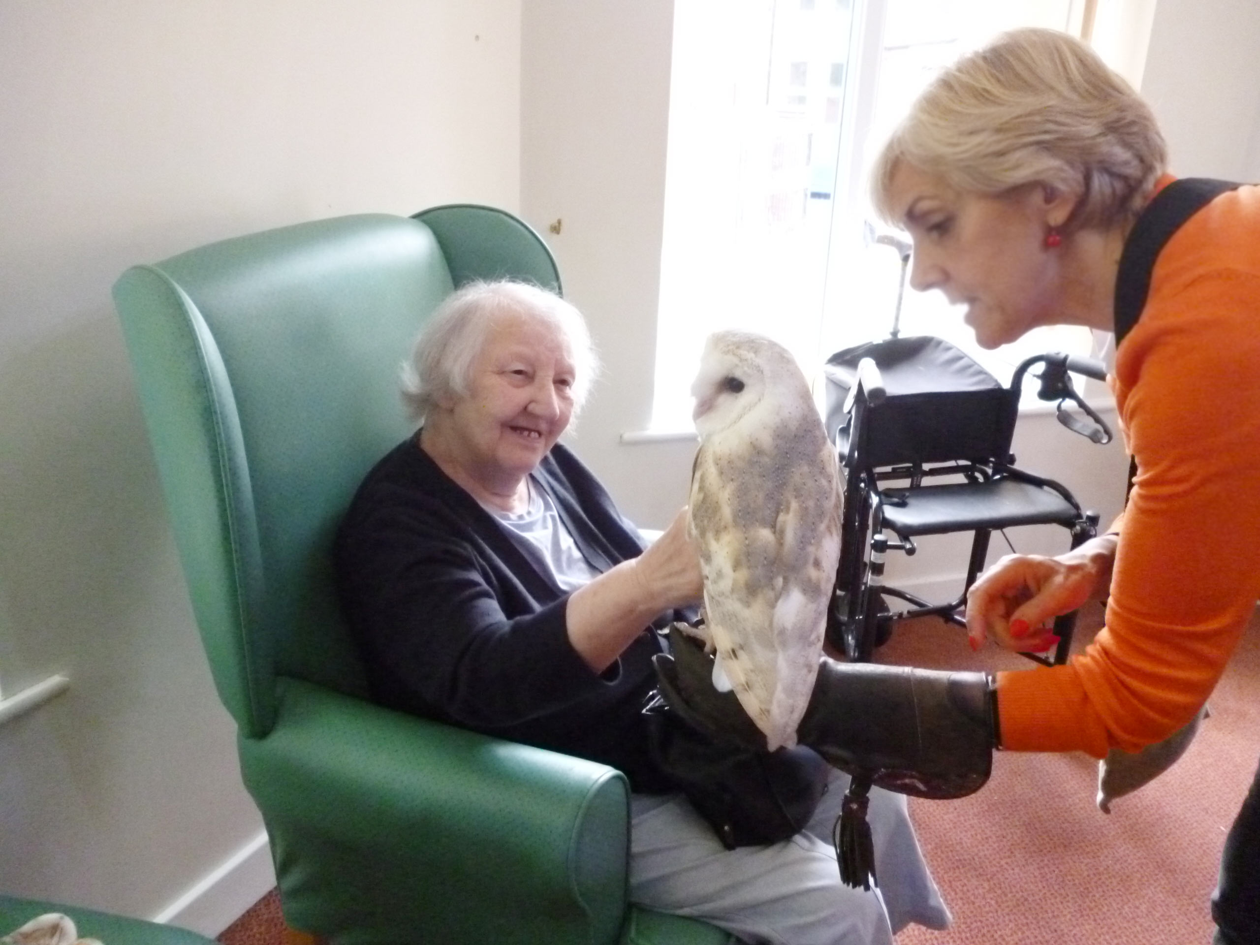 Owl visit 2017