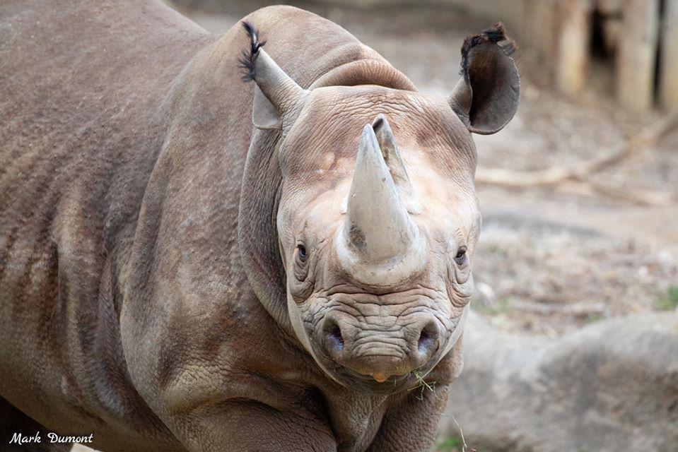 Cinncinati Zoo