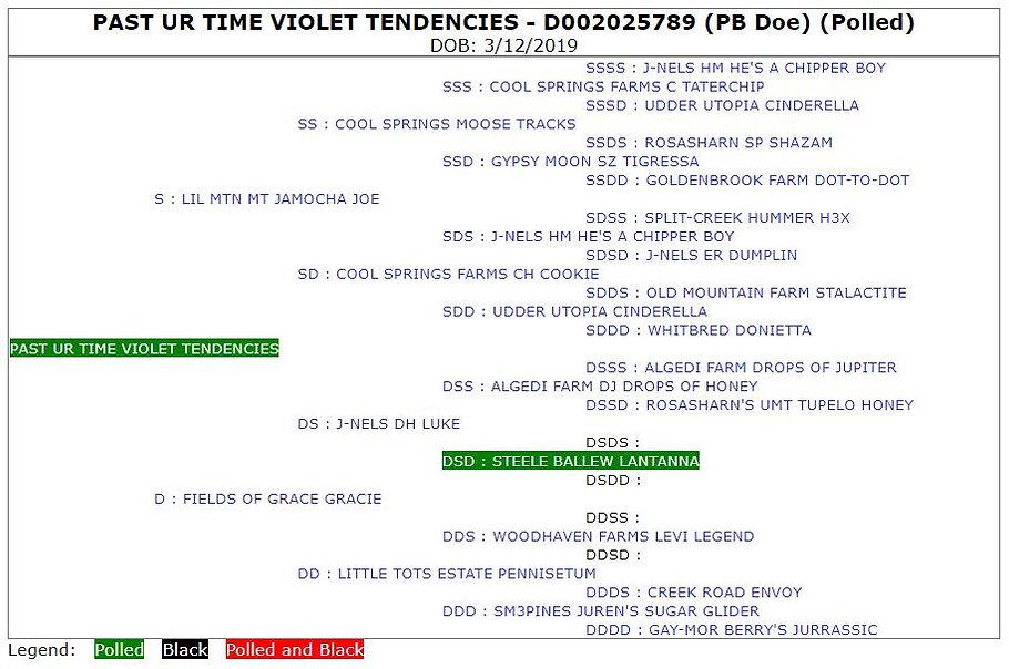 Past Ur Time Violet Tendencies