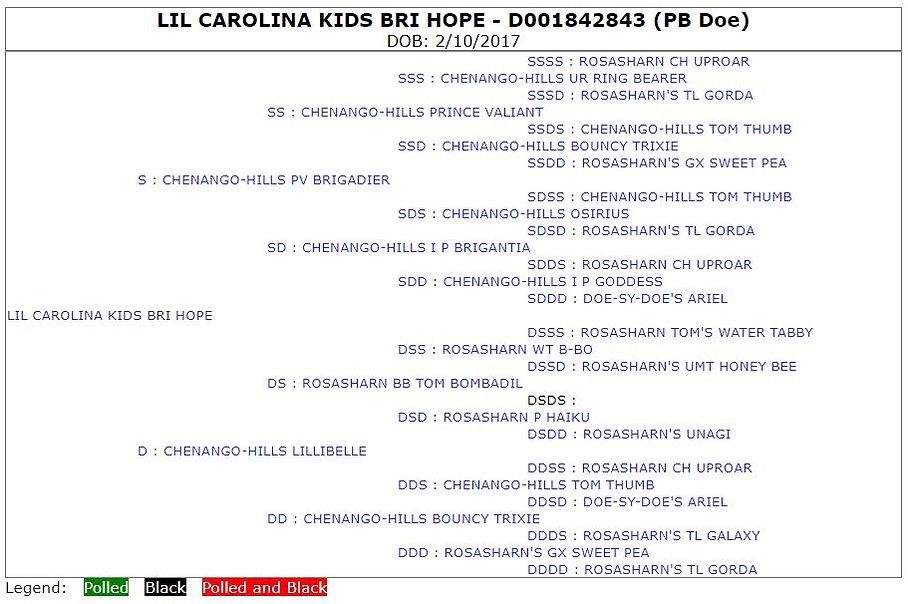 Lil Carolina Kids Bri Hope
