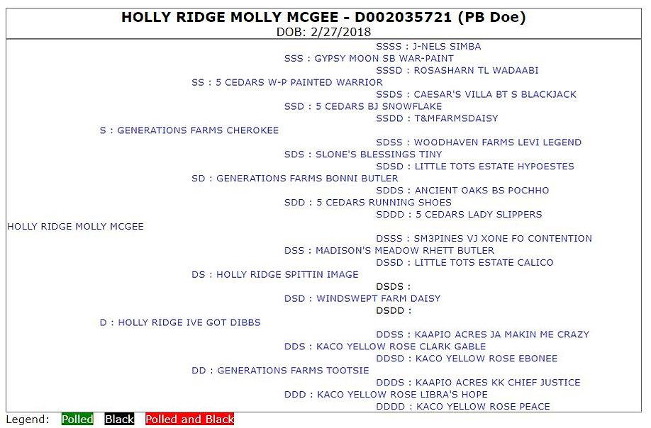 Holly Ridge Molly McGee