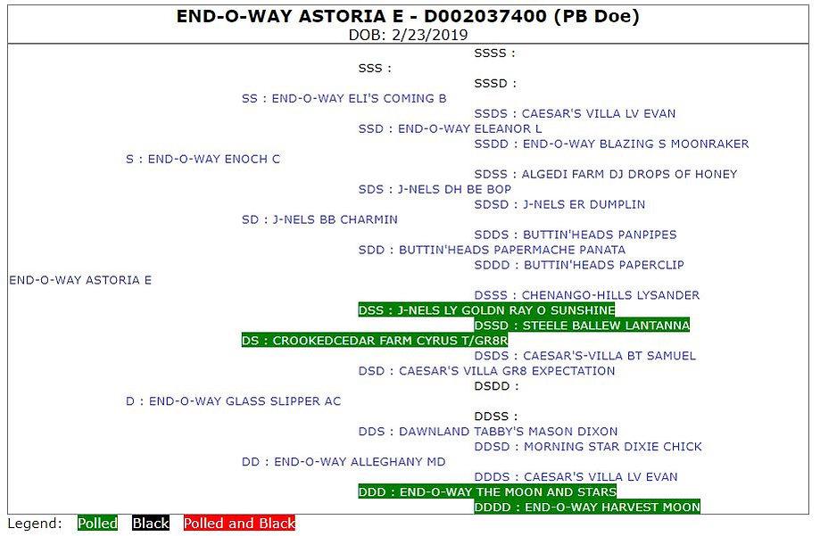 End-O-Way Astoria E