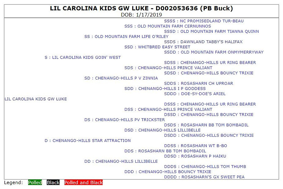 Lil Carolina Kids GW Luke