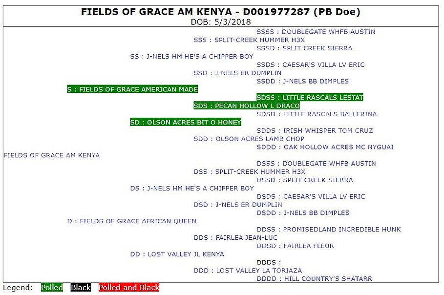 Fields of Grace AM Kenya