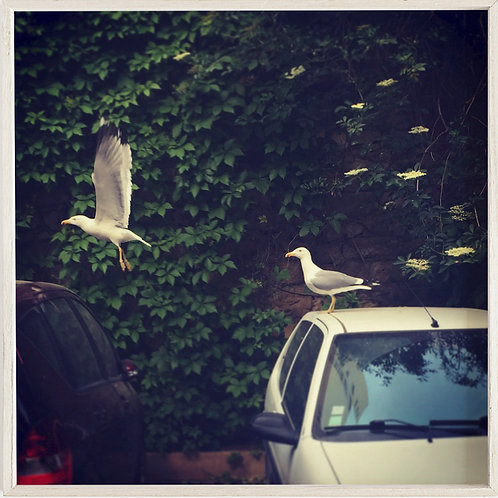 MOUETTES IN THE CITY