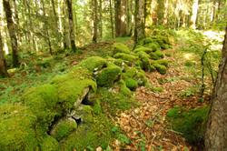 La forêt