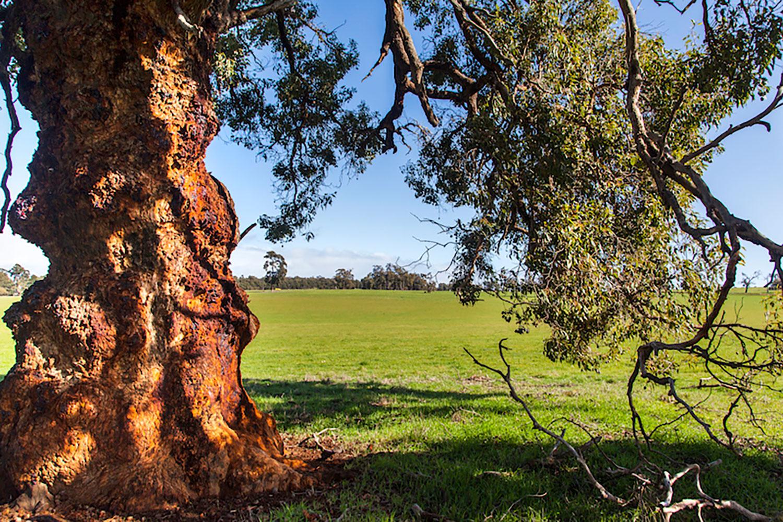 rustic-tree