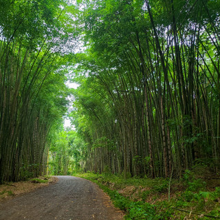 Take a walk in a bamboo forest