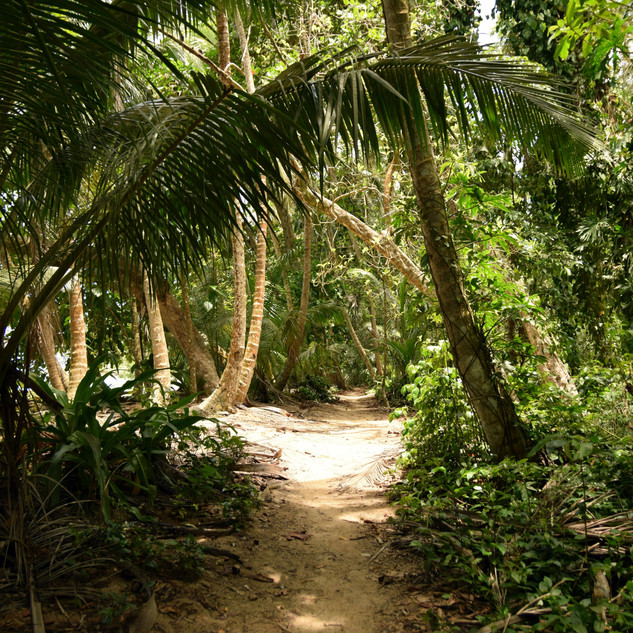 Let's go on a hike in the rainforest