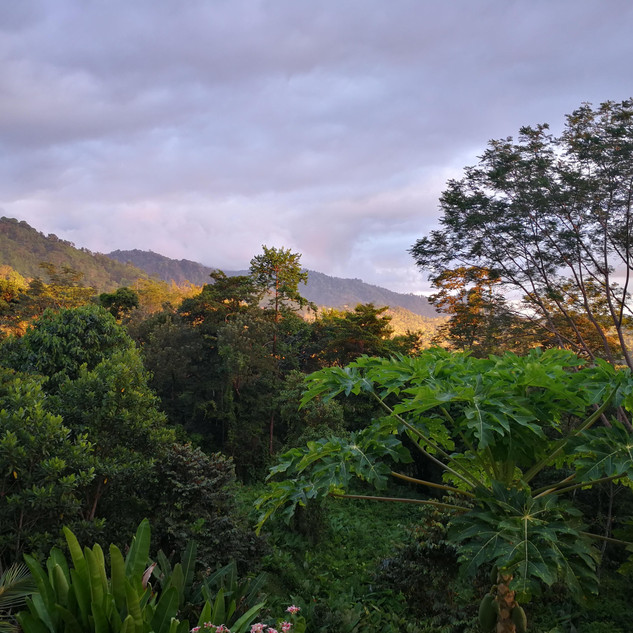 The beautiful rainforest during sunset