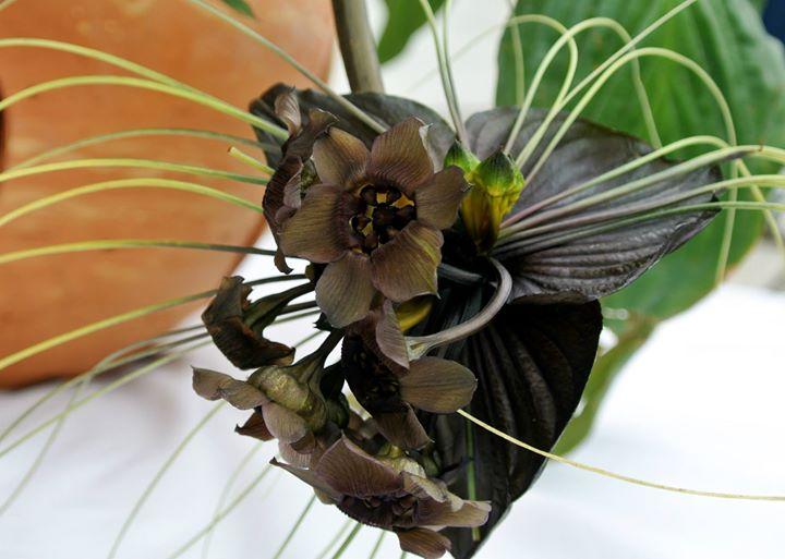 Flores que se cuidan en la Ullumbe