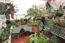 Salón Orquídeas Ullumbe Hotel Pitalito