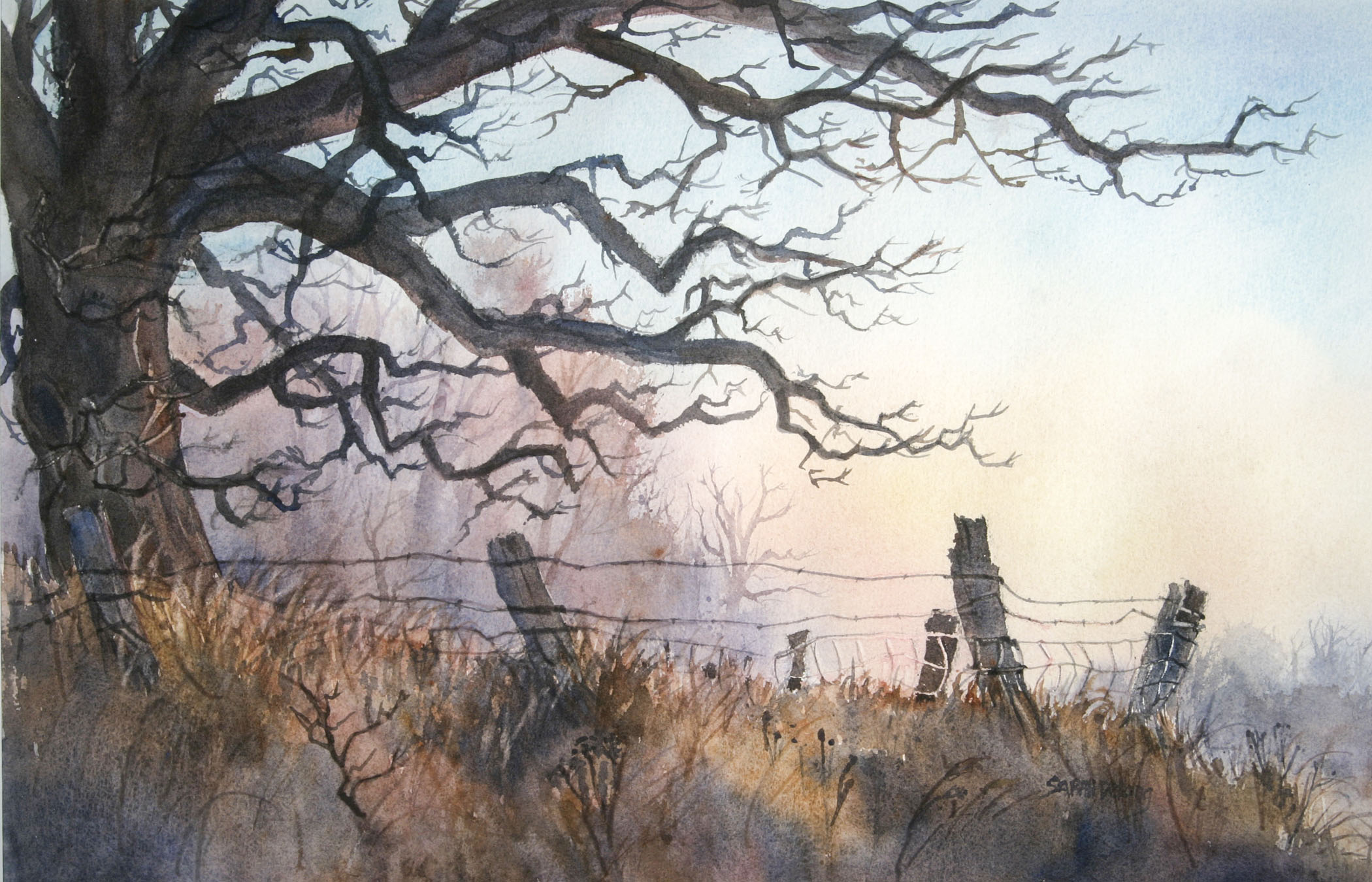Morning Light with Oak Tree