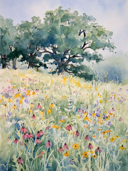 Blooming Prairie and Oaks