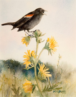 Redwing Black Bird on Compass Plant