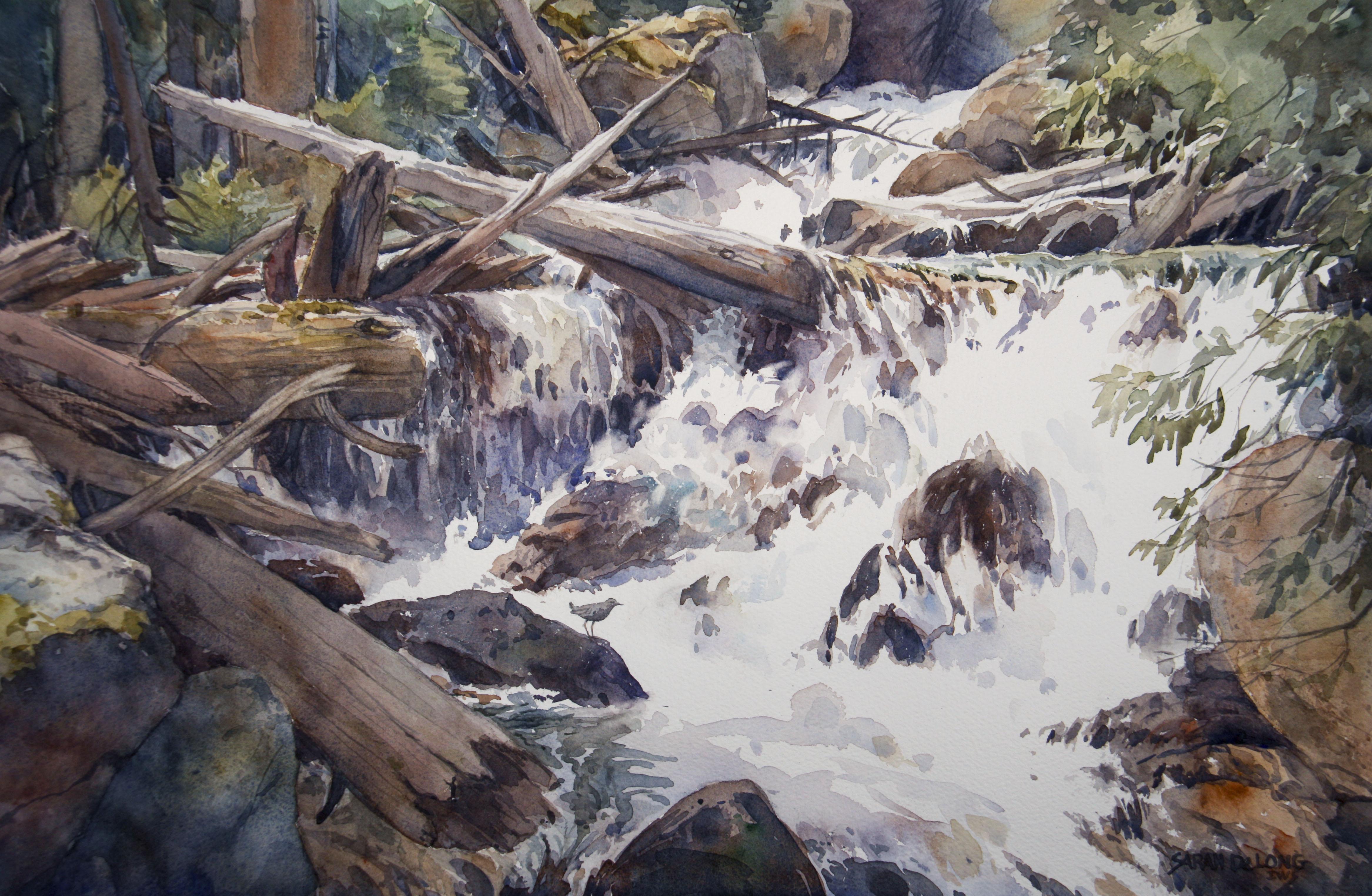 Colorado Stream and Dipper