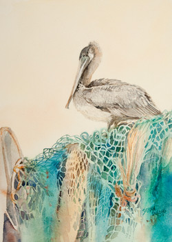 Pelican on Netting