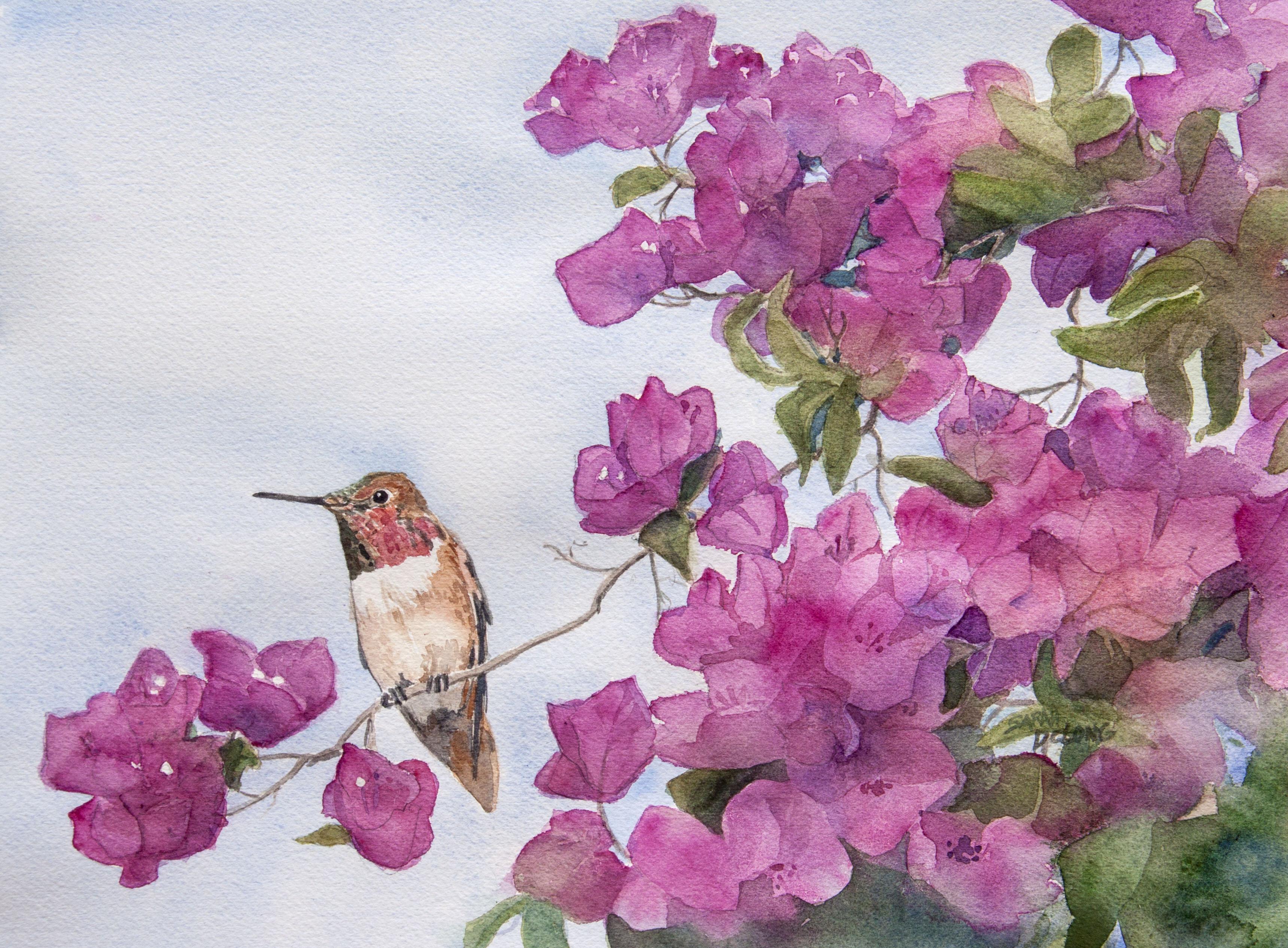 Humming Bird Delight