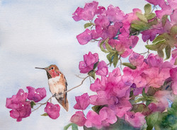 Humming Bird Delight