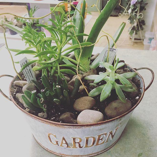 A succulent dish garden leaving the shop