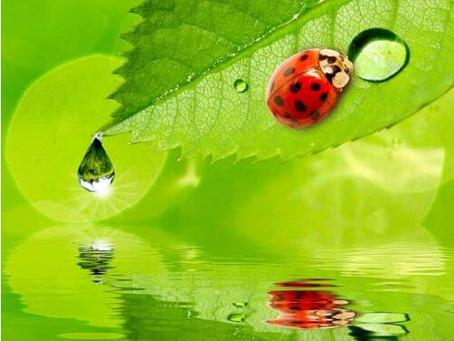 Ladybug's Missing Spots
