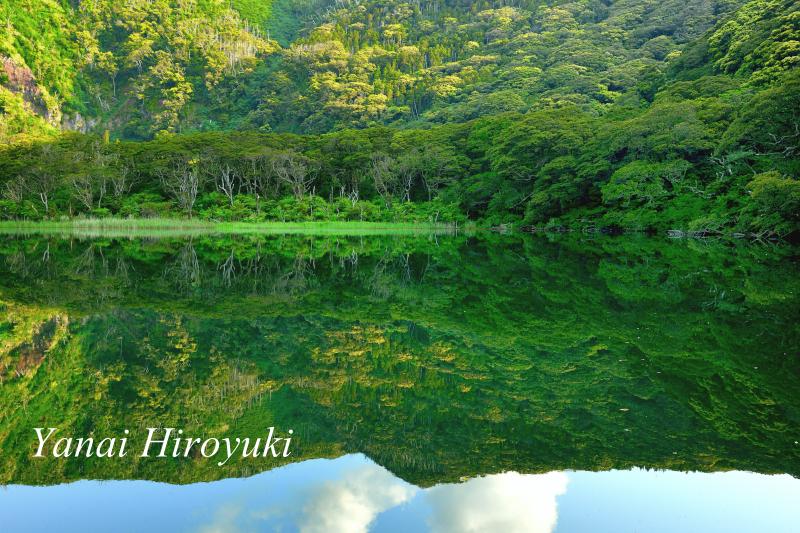 静寂の大路池 (伊豆諸島・三宅島)