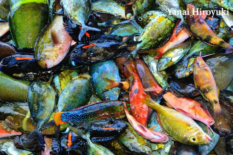 沖縄の魚たち (久高島)