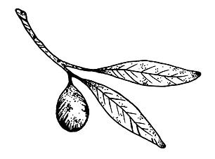 grenn olive.png