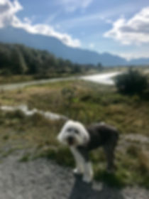 Ferghal on walk. Cari Chiga photo. DR HO