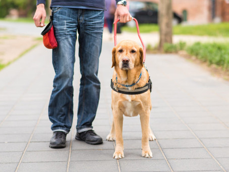 New Service Dog Bill Aims to Stop Fake Service Animals