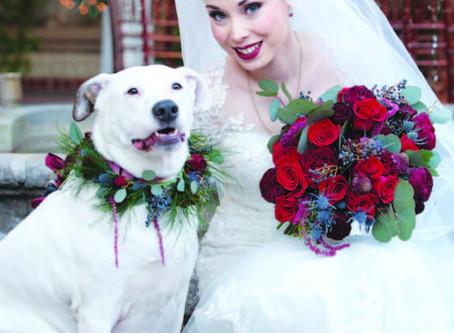 A Canine-Centric Life