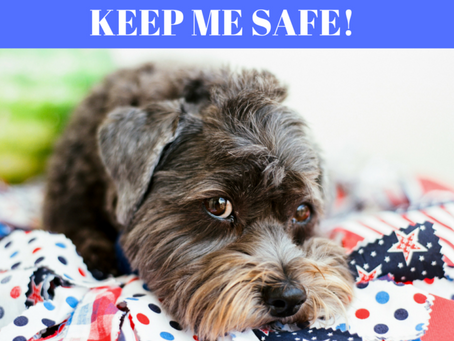 Keep Pets Safe Over the 4th of July Holiday