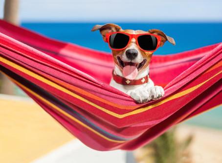 ASK A VET: Can my dog get sunburned?
