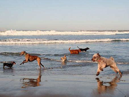 Sun, Sand and Fun in San Diego