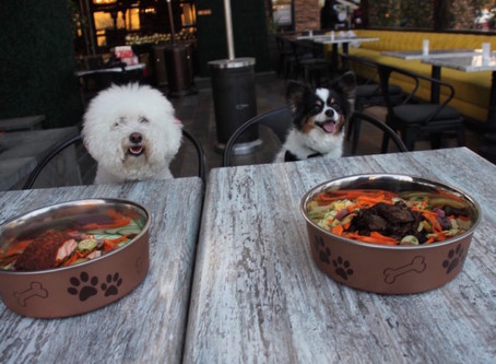 Dining with Your Dog - Sniffing Out the Valley's Restaurant Scene