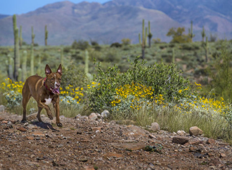 ASK A VET: What do I need to know about Valley Fever?