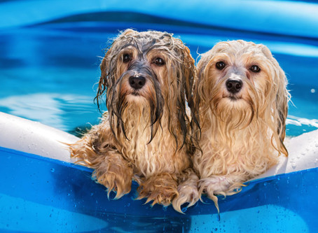 Ask A Vet: How do I keep my dog cool this summer?