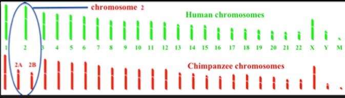 chrome2.png