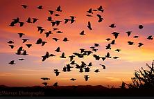 birdsflock.png