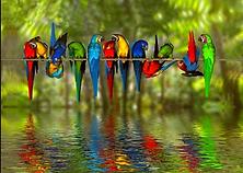 birdsgeneral.png
