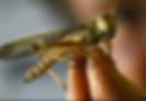 locusts.png