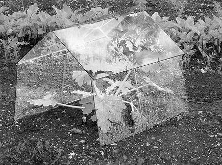 best greenhouse (002).jpg